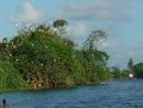 Ảnh Đảo cò